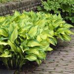 De perfecte samenstelling voor jouw tuin